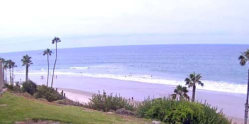 Wild beach with palm trees -  live webcam , California Los Angeles