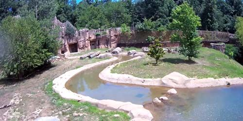 Bears at the zoo -  live webcam , Tennessee Memphis