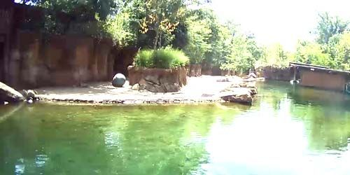 Hippos at the zoo -  live webcam , Tennessee Memphis