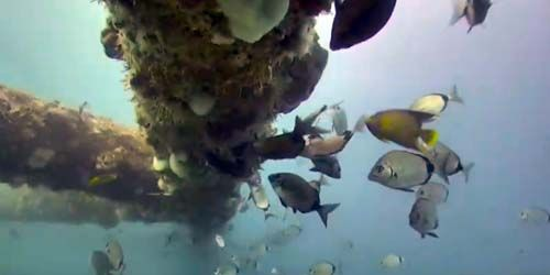 Underwater world of the atlantic ocean -  live webcam , North Carolina Wilmington