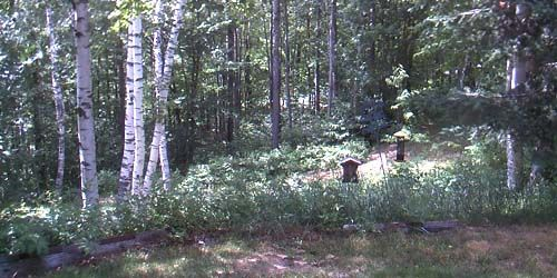 Forest paths in Island Pond -  live webcam , Vermont Montpelier