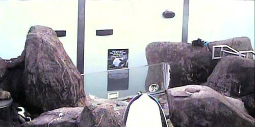 Penguins at the zoo -  live webcam , Pennsylvania Pittsburgh