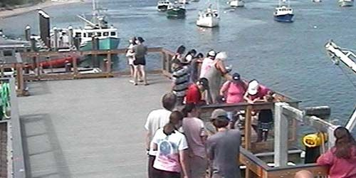 El muelle de los peces -  Webcam , Massachusetts Chatham