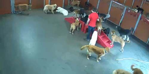 Playroom in the hotel for dogs -  live webcam , Rhode Island Providence