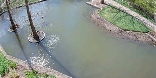 Botanical Pond at the University of Chicago -  live webcam , Illinois Chicago
