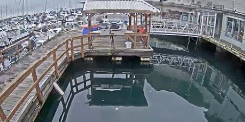Feeding the seals -  live webcam , British Columbia Nanaimo