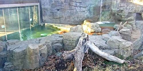 City Zoo -  live webcam , Missouri Saint-Louis